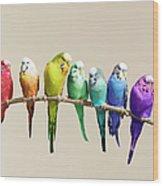 Rainbow Row Of Budgies Sat On A Branch Wood Print