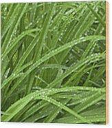 Raindrops Of Daylily Foliage Wood Print