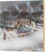 Rattle Snake Wood Print