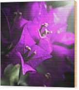 Rays Of Bougainvillea Wood Print