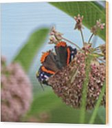 Red Admiral Butterfly On Milkweed Wood Print