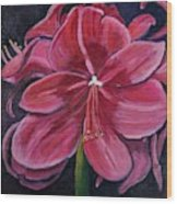Red Amaryllis  Wood Print