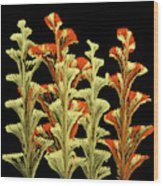 Red and Gold Floral Wood Print