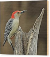 Red-belly At Stump Wood Print