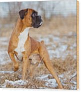 Red Boxer Dog Standing Outdoors Wood Print