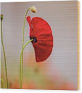 Red Corn Poppy Flowers Wood Print