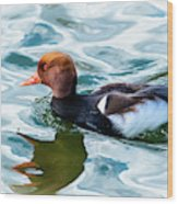 Red Crested Red Beak Red Eye Duck Wood Print