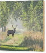 Red Deer In The Forest Wood Print