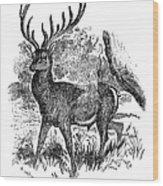 Red Deer Stag Engraving Wood Print