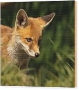 Red Fox Cub In The Grass Wood Print