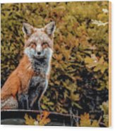 Red Fox In Fall Colors Wood Print