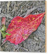 Red Leaf On Green's Hill Wood Print
