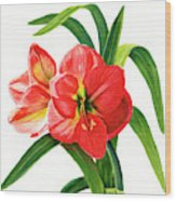 Red Orange Amaryllis Square Design Wood Print