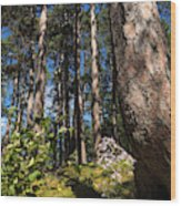 Red Pine Itasca Wood Print