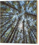 Red Pines 1 Wood Print