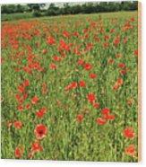Red Poppies Meadow Wood Print