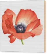 Red Poppy Flower, Image For Prints On Tshirt Wood Print
