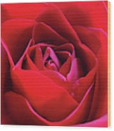 Red Rose 3 Wood Print