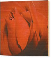Red Rose Special Wood Print