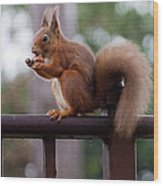 Red Squirrel Getting Ready For Winter Wood Print