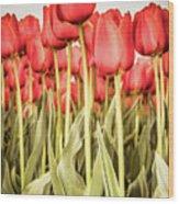 Red Tulip Field In Portrait Format. Wood Print