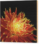 Red-yellow Dahlia Flower Wood Print