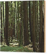 Redwood Trees Armstrong Redwoods St Wood Print