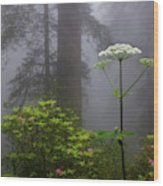 Redwoods By Crescent City 1 Wood Print