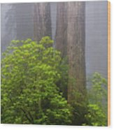 Redwoods By Crescent City 7 Wood Print
