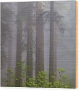 Redwoods By Crescent City 8 Wood Print