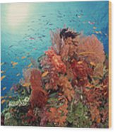 Reef Scenic Of Hard Corals , Soft Wood Print