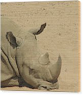Resting Rhinoceros With His Head Down In A Sandy Area Wood Print