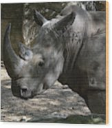 Rhino Standing In The Shade On A Summer Day Wood Print