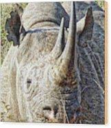 Rhino Zen Wood Print