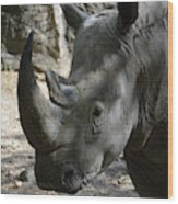 Rhinoceros With Two Horns Up Close And Personal Wood Print