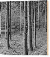 Road Passing Through Forest, Stuttgart Wood Print