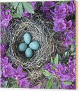 Robins Nest In Azalea Bush, Spring Wood Print