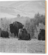 Rocky Mountain Bison Wood Print