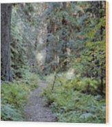 Roosevelt Grove Wood Print