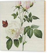 Rosa Bengale The Hymenes By Redoute Wood Print