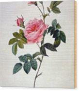 Rosa Inermis Wood Print