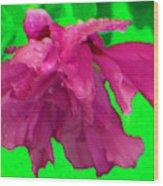 Rose Of Sharon Rain Drops Wood Print
