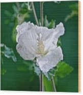 Rose Two Wood Print
