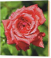 Rose With Raindrops Wood Print