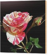 Rose With Two Buds Wood Print