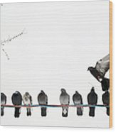Row Of Pigeons On Wire Wood Print