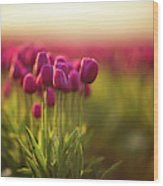 Rows Of Magenta Painterly Tulips Wood Print