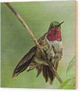 Ruby Hummingbird With Passion Bud Wood Print