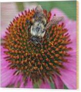 Rudbeckia Coneflower With Bee, Canada Wood Print