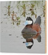 Ruddy Duck, Plumas County California Wood Print